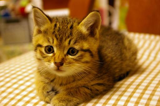 Question cat lacco 25