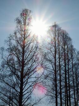설날의 햇살