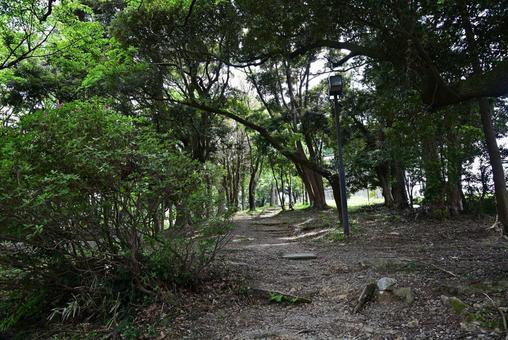 Sayonakayama Park, a beast road surrounded by fresh greenery