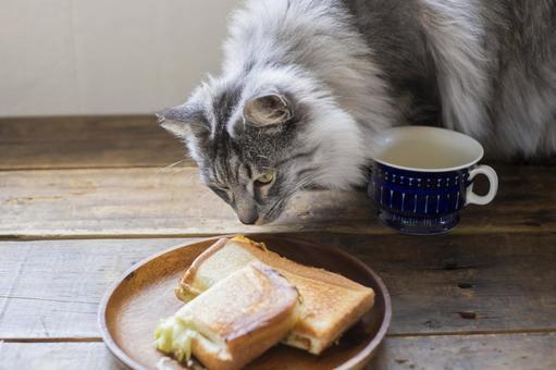 猫がホットサンドを食べに来る