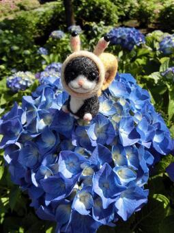 蝸牛貓和繡球花6
