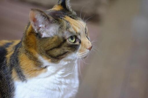 Cat's profile