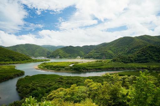 Mangrove primary forest of Amami Oshima
