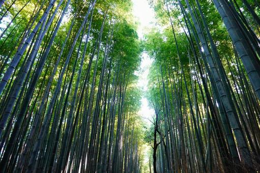 Kyoto Arashiyama Small diameter of bamboo grove pierced by sunlight