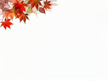Autumn leaves background text space 16082401