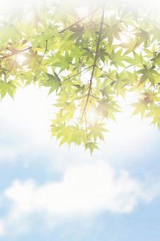Fresh green _ AC 02
