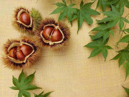 Chestnut and Momiji 6