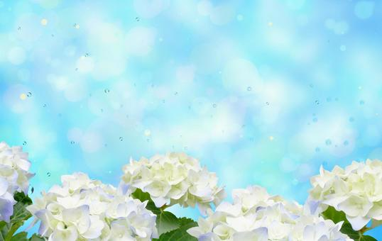 Image of rainy season with hydrangea Glitter background material 05