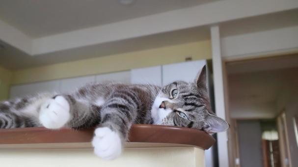 A cute tabby cat lying in trouble