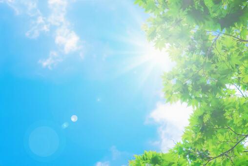 新鮮的綠色和藍色的天空