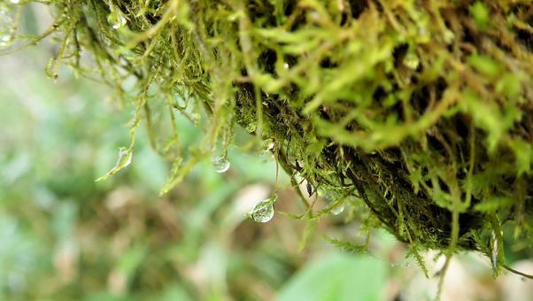 Moss 6