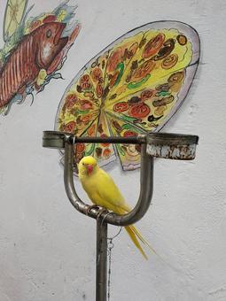 남쪽 섬의 노란 앵무새