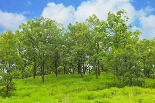 Forest Forest Tree Tree Green Green Meadow Blue Sky