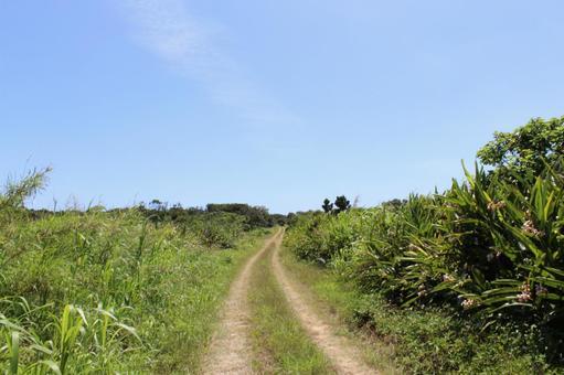 未铺砌的道路冲绳Kubinishima
