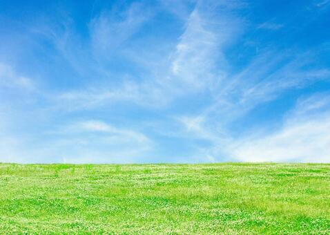 Grassland with blue sky and clover _5