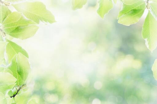 Sunlit green background 2