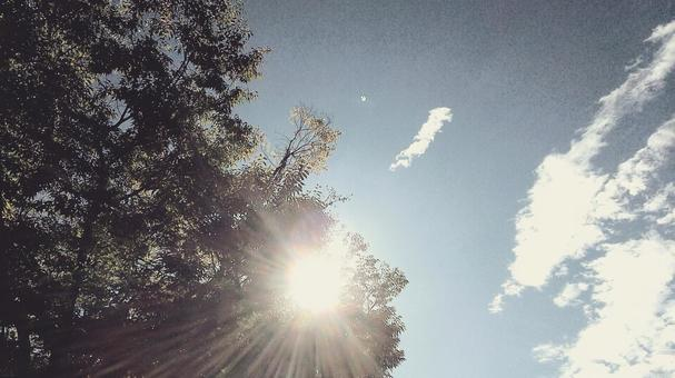 여름의 햇살