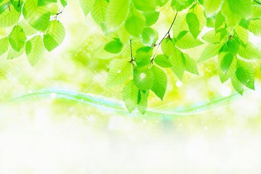 風吹過的山毛櫸森林_4