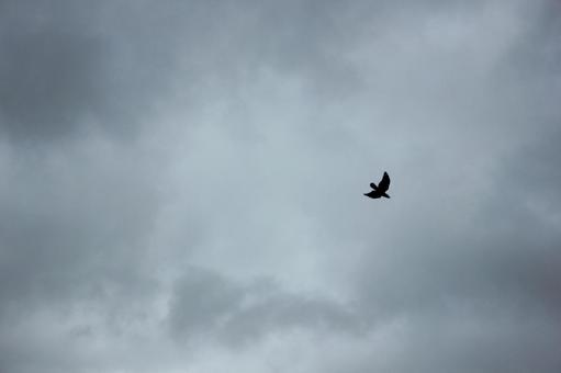 흐린 하늘을 나는 새