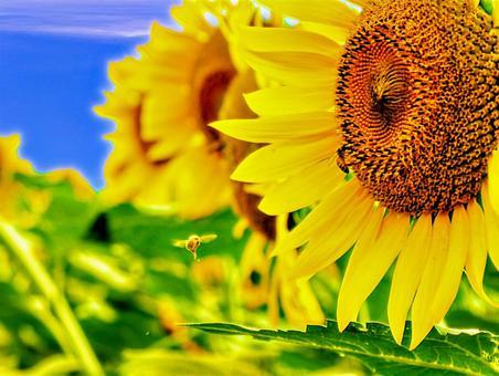 Japanese summer sunflower landscape 03