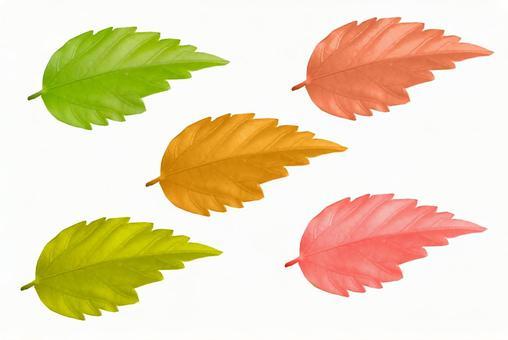 5 colors of leaf cutouts