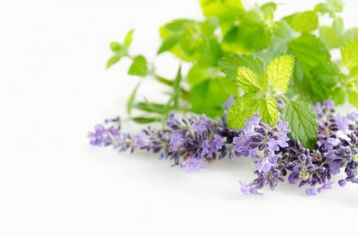Lemon balm and lavender
