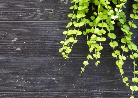 Background (Wood grain) [Grain] -130