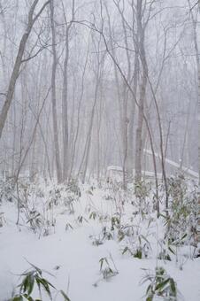 Snow scene at Nishioka water source in Hokkaido