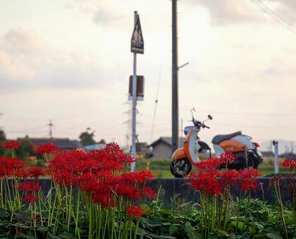 피안 꽃 밭에 주차 오토바이 자전거