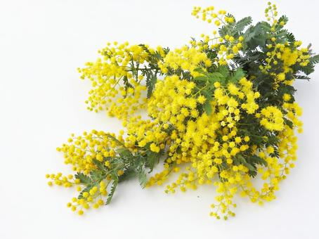 Mimosa mini bouquet