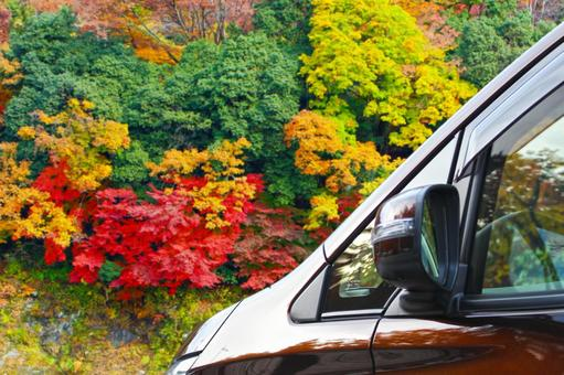 Autumn leaves and drive 1