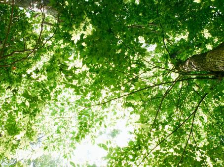 Fresh green forest image