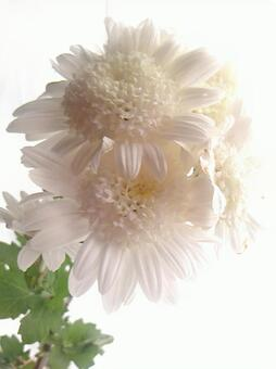 흰 꽃 피는 1