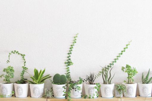 Mini-house Plant Interior