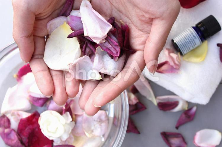 花びら 3の写真