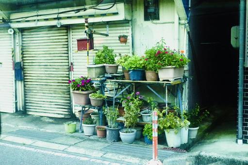 Downtown Nara Flowerpot Home garden