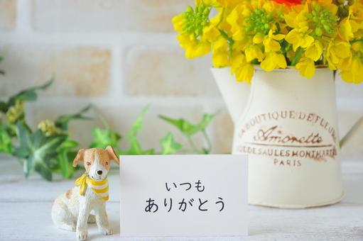 """Dogs, flowers and a """"thank you"""" card"""