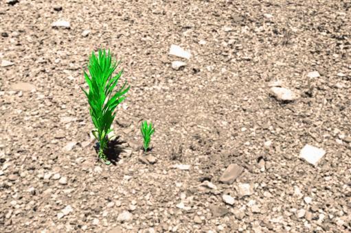 Summer grass of dry ground # 18