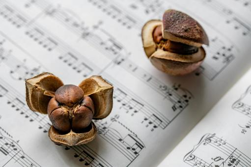 Piano sheet music and camellia fruit