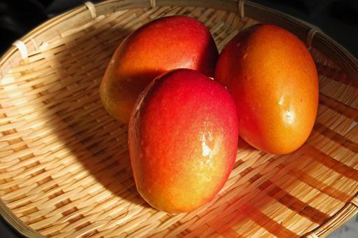 沖繩縣的芒果#3