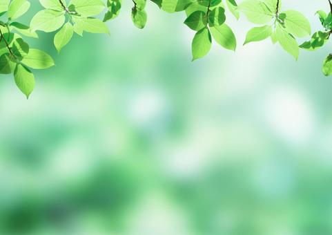 Leaves and green background