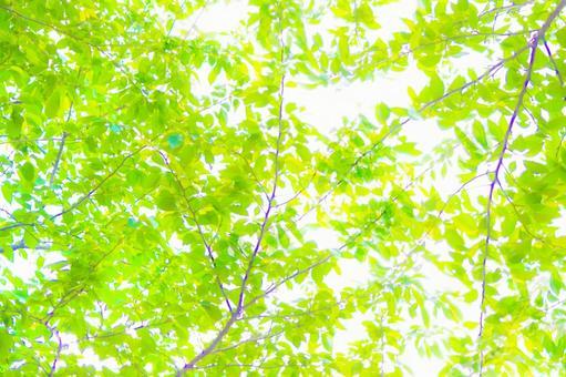 Fresh green cherry tree
