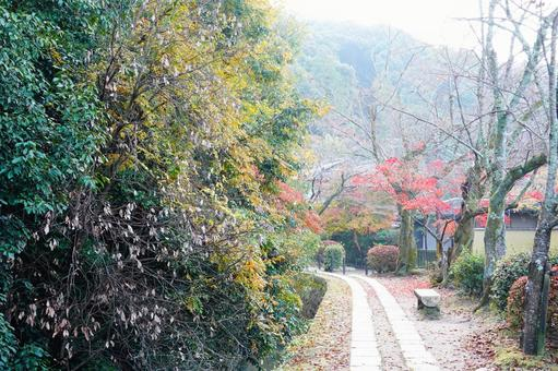 Autumn Kyoto Philosophy Road Going down the autumn leaves road