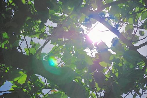 햇살 신록