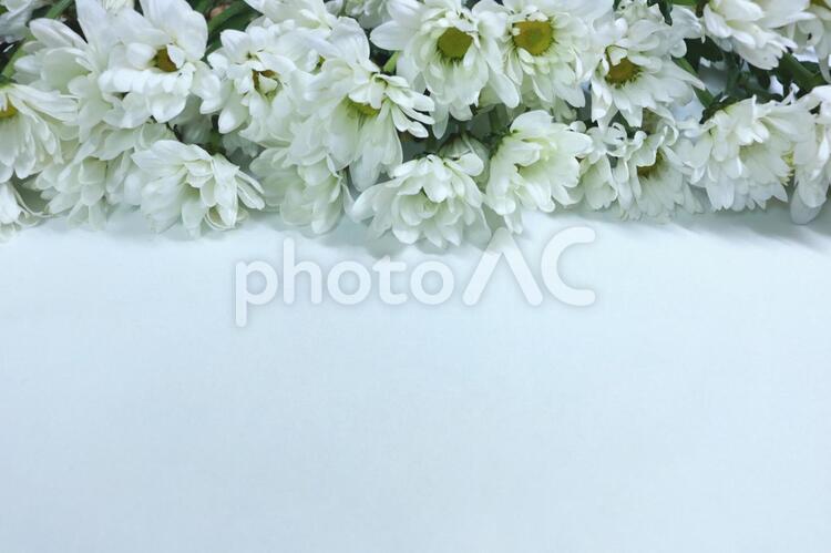 菊の花 白い花 テクスチャ フレーム 背景 壁紙の写真