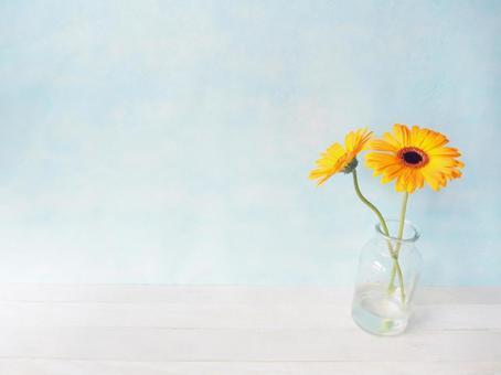 與花同住 黃色非洲菊