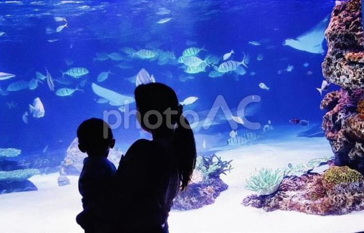 親子での水族館の写真