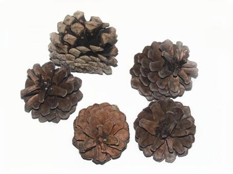 Pine cone 03
