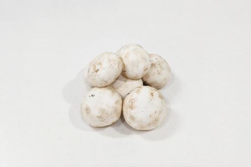 6 개의 버섯