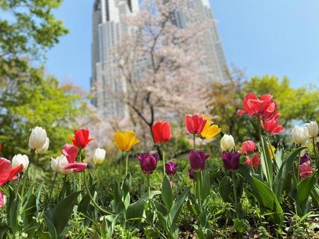 Tokyo Metropolitan Government Building in the season when tulips bloom